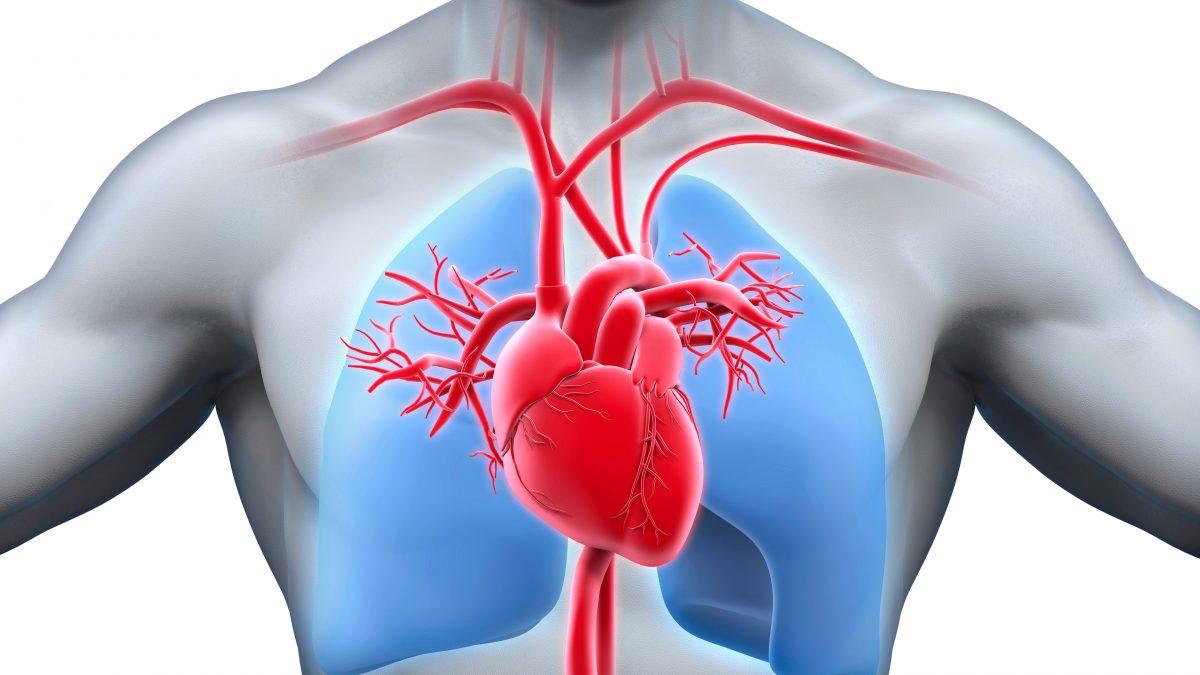 Cardiovascular Evaluation